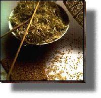Mechanically Hulled Sesame Seeds