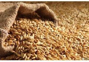 All Purpose Wheat Grains