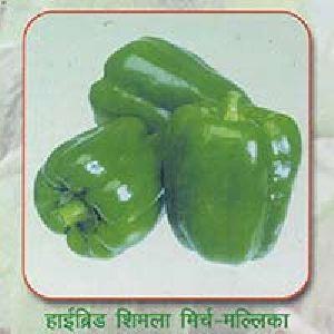 Hybrid Sweet Pepper