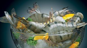 Black Tiger Shrimp (penaeus Monodon)