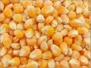 Dry Maize