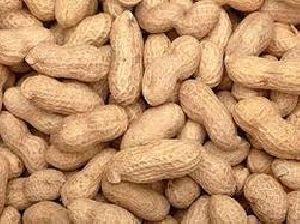 Shelled Groundnut