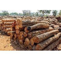 Indian Timber Logs
