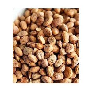 Cuddapah Nuts