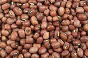 Brown Moth Beans