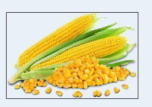 Yellow Corn Seeds