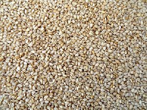 99/1% Natural Sesame Seeds