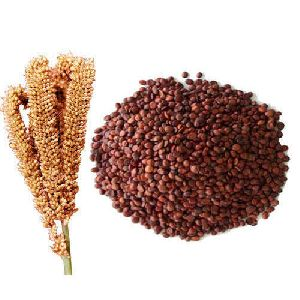 Finger Millet Seeds