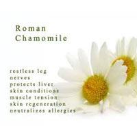 Chamomile Oil- Roman