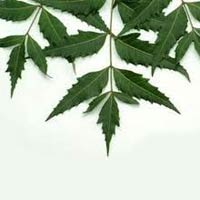 Neem Leaves, Neem Powder