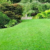 Lawn Grass Carpet Services
