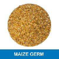 Corn Germ