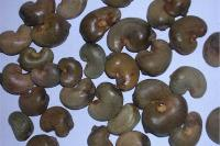 Cashew Nut Shells