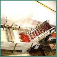 Vegetable Processing Plant Machinery
