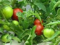 Organic Agricultural Products