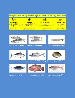 Fresh Chilled Fish Home Delivery