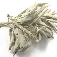 sage dried leaves