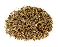Ocimum Sanctum Herbs