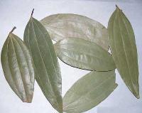 Dry Bay Leaves
