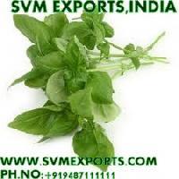 Ocimum Sanctum Dry Leaves