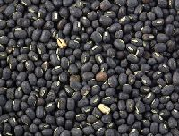 Urad (blackgram)