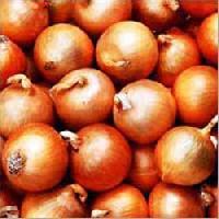 Fresh Nasik Onions