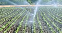 Drip Irrigation Sprinklers
