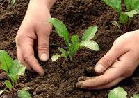 Herbal Pest Control