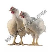 Broiler Starter Poultry Feed