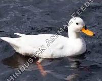 Duck Starter Feed