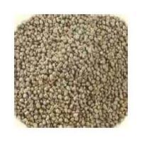 Pearl Millet - Bajra