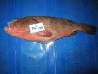 Ree Fcod Fish, Grouper Fish