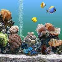 Seawater Aquarium