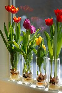 Indoor Garden Flower Bulbs