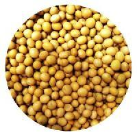 Organic Soybeans