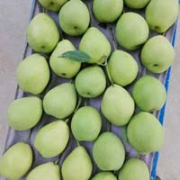 Fresh Chinese Pears