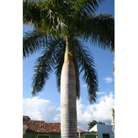 Frp Palm Tree