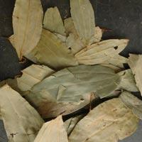 Dried Bay Leaves (tej Patta)