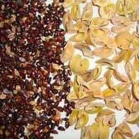 Amla Seeds (emblica Officinalis)
