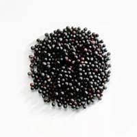 Black Mustard Seeds, Brassica Nigra