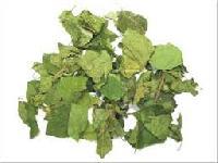 Organic Gurmar Leaves (organic Gymnema Sylvestre)