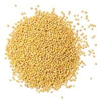 Mustard Oil Seeds