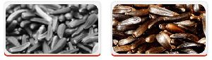 Oil Seeds - Niger Seeds
