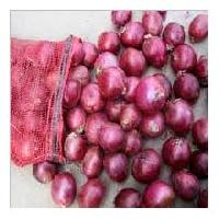 Red Onion-02