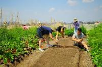 Corporate Farming Services