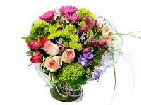 Gerbera Exotic Flowers