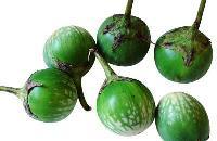 Fresh Green Brinjals