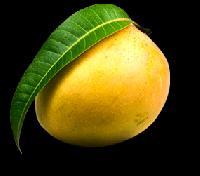 Alphonso Mango
