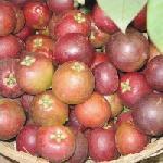 Kokam (garcinia Indica) Juice Powder