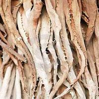 Dry Aloe Vera Leaves